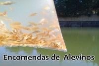 ENCOMENDAS DE ALEVINOS