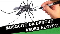ENCONTRADO MOSQUITO DA DENGUE EM DONA FRANCISCA