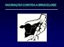 Campanha de Vacinação da Brucelose em terneiras